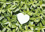 Heart on leaves