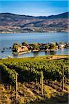 Vineyard Overlooking Lake and Houses, Kelowna, Okanagan Valley, British Columbia, Canada