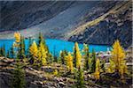 McArthur Lake and Autumn Larch, Yoho National Park, British Columbia, Canada