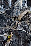 Close-Up of Rocks, Lake McArthur Trail, Yoho National Park, British Columbia, Canada