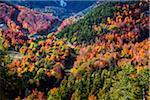 Ski Runs Through Forest at Mountainside Ski Resort, Whiteface Ski Resort, Whiteface Mountain, Wilmington, Essex County, New York State, USA