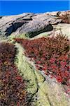 Vegetation in Rocky Landscape, Acadia National Park, Mount Desert Island, Hancock County, Maine, USA