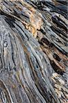 Detail of Rocky Terrain, Pemaquid Point, Bristol, Lincoln County, Maine, USA