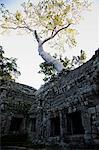 Stone ruins of Ta Prohm Temple, Angkor Wat, Cambodia