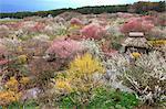 Flower garden in Minowa, Nagano Prefecture