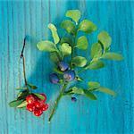 A sprig of fresh wild berries
