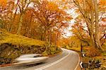 Car speeding through autumn forest road, Lake District National Park, Cumbria, England, United Kingdom, Europe