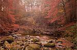 Misty autumn valley near Ambleside, Lake District National Park, Cumbria, England, United Kingdom, Europe