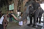 Elephant blessing, Srirangam, Tamil Nadu, India, Asia