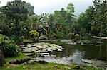 Jardim Botanico (Botanical Gardens), Rio de Janeiro, Brazil, South America