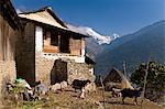 Ulleri Village, 2080 metres, Annapurna Himal, Nepal, Himalayas, Asia
