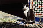 Portrait of Cat Sitting in Sun Beam on Tiled Floor, Bahia Palace, Medina, Marrakesh, Morocco, Africa