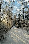 Snow-Covered Footpath Through Forest with Sun Shining Through Trees in Winter, Schwenninger Moos Nature Reserve, Villingen-Schwenningen, Baden-Wuerttemberg, Germany