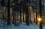 Sun Shining Through Trees in the Afternoon, Black Forest in Winter, near Villingen-Schwenningen, Schwarzwald-Baar, Baden-Wuerttemberg, Germany
