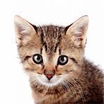 Portrait of a striped small kitten