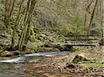 Wooden Bridge across Flowing Stream in Forest in Spring, France