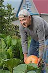 A senior man picking up a pumpkin from his garden