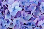 Blooming flowers