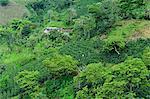 Buenavista Coffee Zone, Colombia, South America
