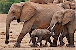 Elephants leaving a waterhole in Tsavo East National Park.