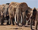 Elephants at a waterhole in Tsavo East National Park.