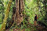 Awe inspiring tree in Parque Nacional de Amistad, Panama, Central America.