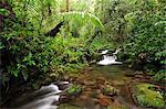 Creek at Parque Nacional de Amistad near Boquete, Panama, Central America.