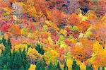 Autumn colors, Akita Prefecture