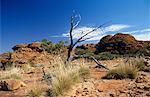 Arid australian landscape