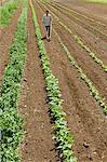 Man using cultivator in field on farm