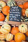 English gourds
