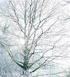 Sunburst through tree in Winter.
