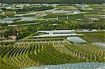 Aerial view of crop fields