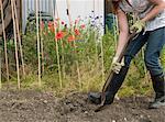 A gardener digging their allotment