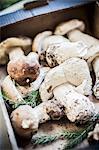 Fresh porcini mushrooms in a cardboard carton
