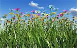 Wildflower meadow, computer artwork.