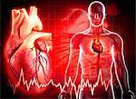 Human heart, computer artwork.