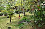 South America, Brazil, Paraty, Costa Verde, Green Coast,, a cabana room at the Bromelias pousada and spa set, in the Atlantic Coastal rainforest in Grauna near Paraty