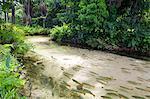 South America, Brazil, Mato Grosso, Nobres, Piraputanga fish in the Estivado poo, a natural swimming pool on the Estivado river near Bom Jardim in Nobres