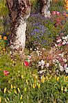 China, Yunnan, Xinping. Flowers in Mount Ailaoshan Nature Reserve near Xinping.