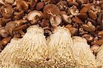 China, Yunnan, Jinghong. Mushrooms for sale at Jinghong market.