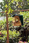 China, Yunnan, Kunming. Bird for sale in Kunming.