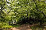 UK, Wiltshire. Two women walk through the woods in Wiltshire.