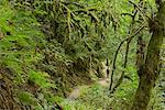 Hiker at Elowah Falls, Columbia River Gorge National Scenic Area, Multnomah County, Oregon, USA