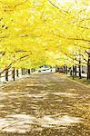 Green leaves at Showa Kinen Park, Tokyo
