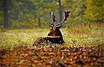 Deer relaxing in grass