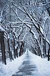 Snowy trees on city street
