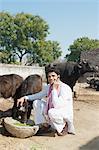 Farmer feeding Water Buffalo (Bubalus Bubalis) calfs and talking on a mobile phone, Sonipat, Haryana, India