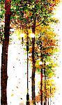 Autumn Tree And Street Light