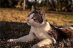 Domestic Cat On Meadow, Croatia, Slavonia, Europe